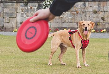 Dog Accessories | Arrak Outdoor