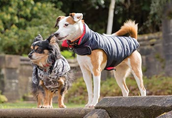 Dog Clothes and Dog Blankets | Arrak Outdoor